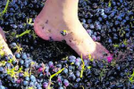 GrapeStomp