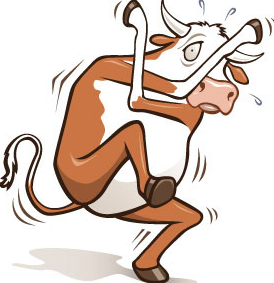 Cow Scared
