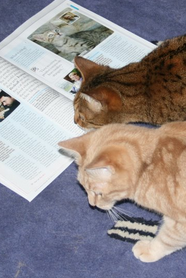 Cat Reading Catalogue