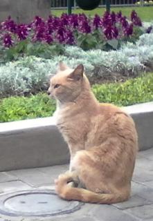 Cat in Park